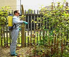 japanese knotweed removal leeds